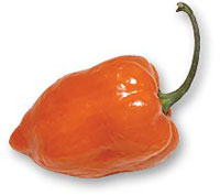 Capsicum chinense - Habanero Orange